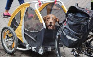 Hundetransport mit Fahrrad