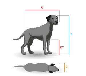 Hund abmessen