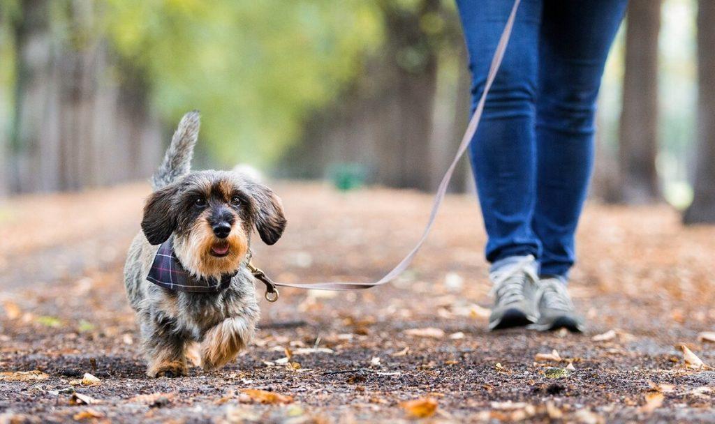 Versicherungen für Hunde von AGILA