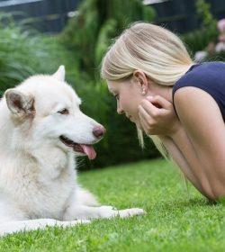 AGILA Hundeversicherungen